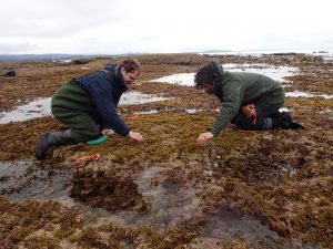 Surveys and experiments are conducted on intertidal reefs on the south island of New Zealand